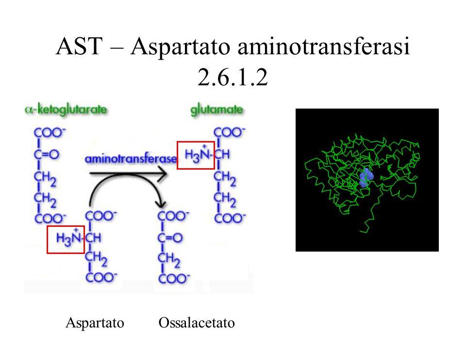 AST – Aspartato aminotransferasi 2.6.1.2