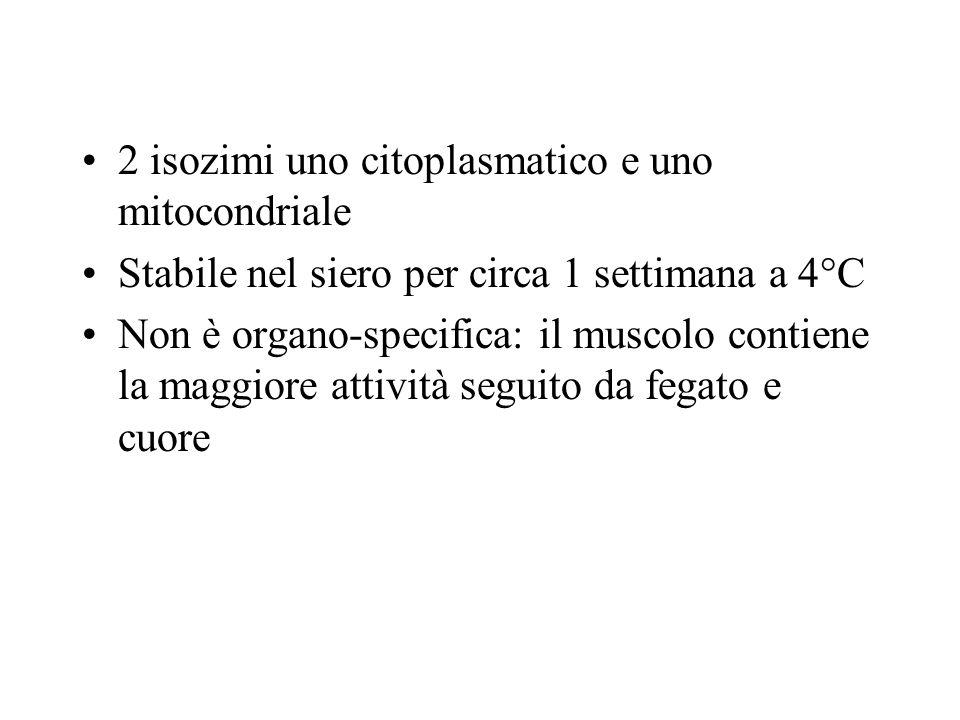 2 isozimi uno citoplasmatico e uno mitocondriale