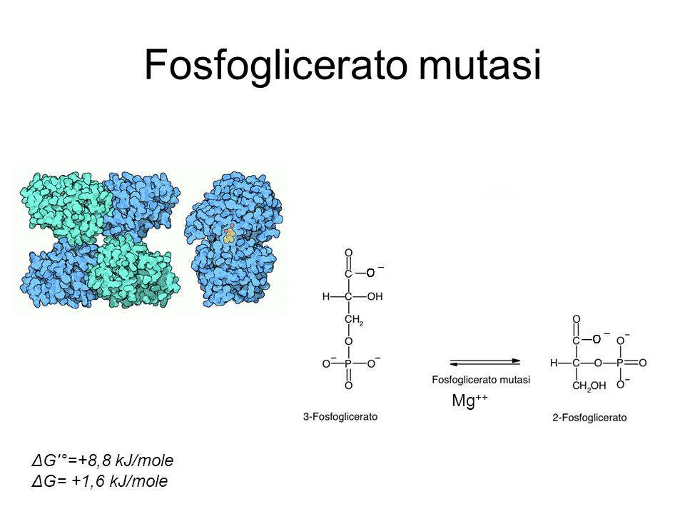 Fosfoglicerato mutasi