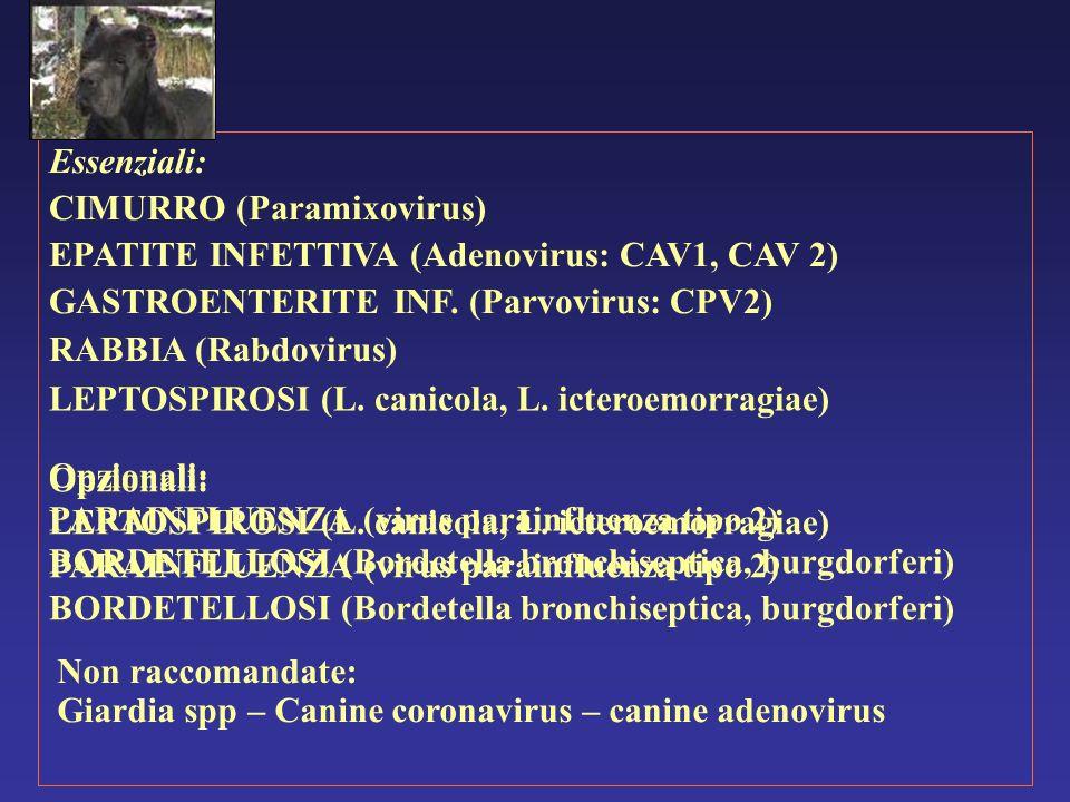 Essenziali: CIMURRO (Paramixovirus) EPATITE INFETTIVA (Adenovirus: CAV1, CAV 2) GASTROENTERITE INF. (Parvovirus: CPV2)