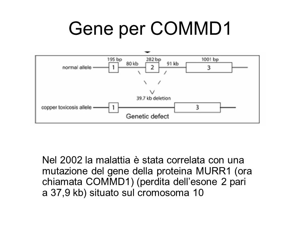 Gene per COMMD1
