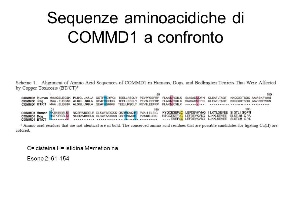 Sequenze aminoacidiche di COMMD1 a confronto