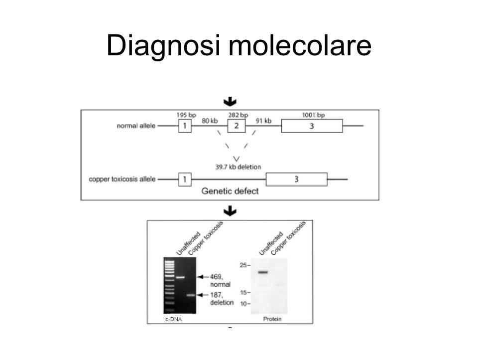 Diagnosi molecolare c-DNA