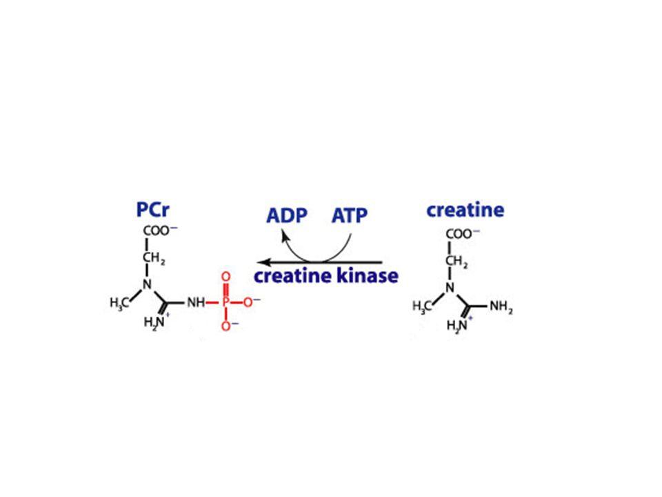 creatine by creatine amidohydrolase.