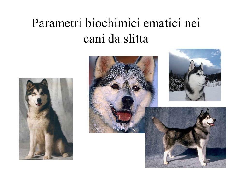 Parametri biochimici ematici nei cani da slitta