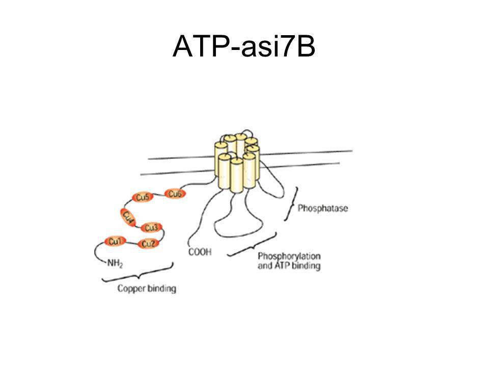 ATP-asi7B