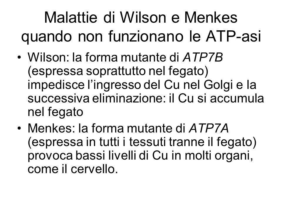 Malattie di Wilson e Menkes quando non funzionano le ATP-asi