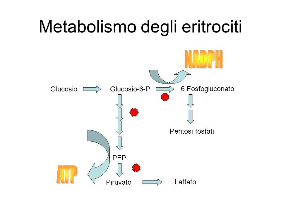 Metabolismo degli eritrociti