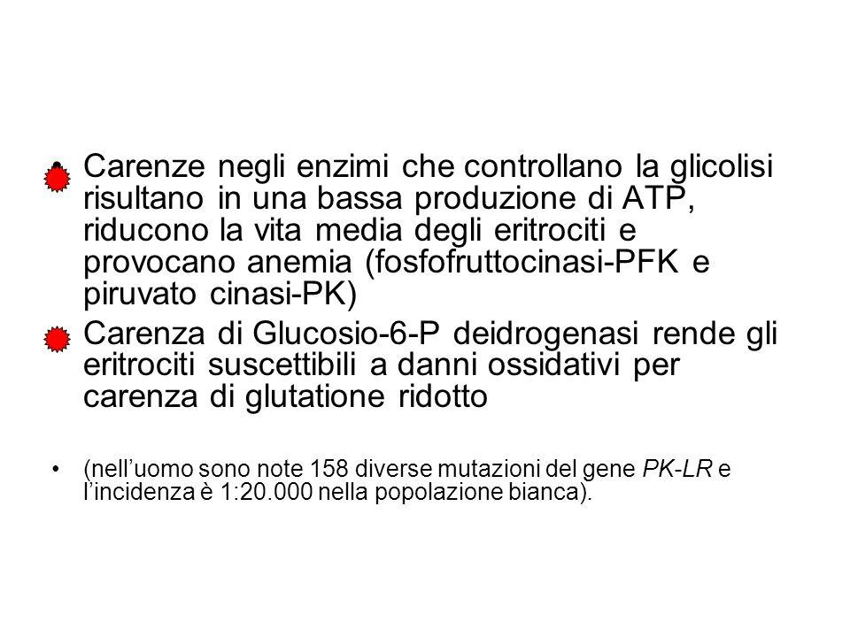 Carenze negli enzimi che controllano la glicolisi risultano in una bassa produzione di ATP, riducono la vita media degli eritrociti e provocano anemia (fosfofruttocinasi-PFK e piruvato cinasi-PK)