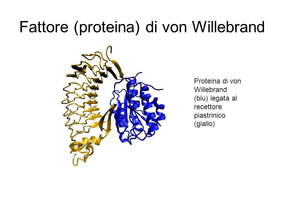 Fattore (proteina) di von Willebrand