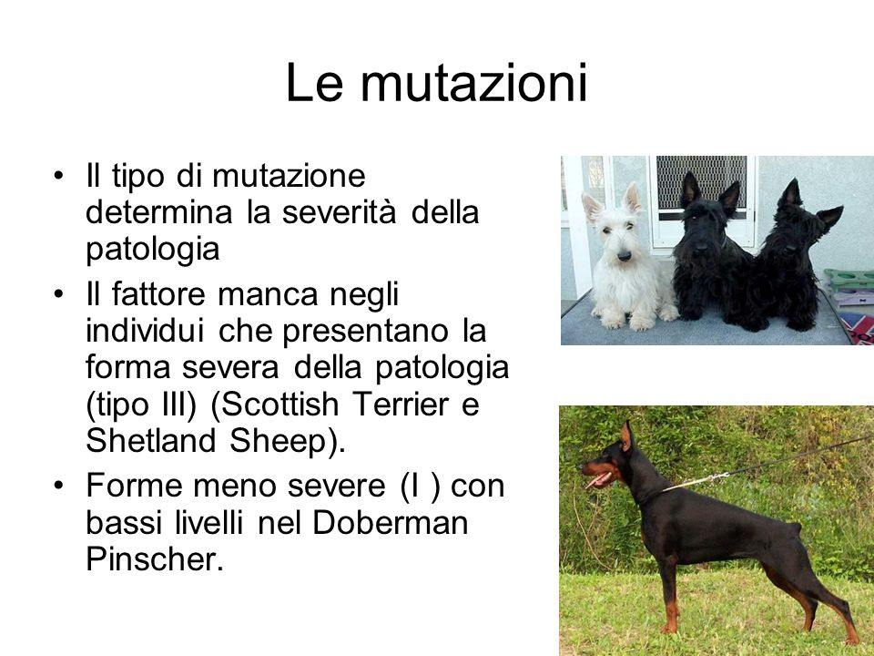 Le mutazioni Il tipo di mutazione determina la severità della patologia.