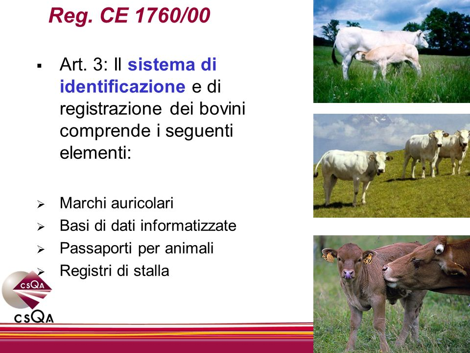 Reg. CE 1760/00Art. 3: Il sistema di identificazione e di registrazione dei bovini comprende i seguenti elementi: