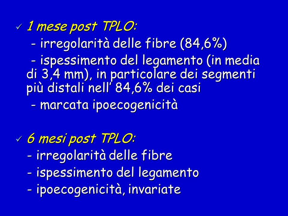 1 mese post TPLO:- irregolarità delle fibre (84,6%)