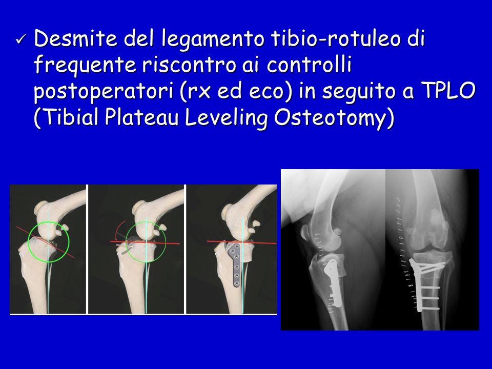 Desmite del legamento tibio-rotuleo di frequente riscontro ai controlli postoperatori (rx ed eco) in seguito a TPLO (Tibial Plateau Leveling Osteotomy)