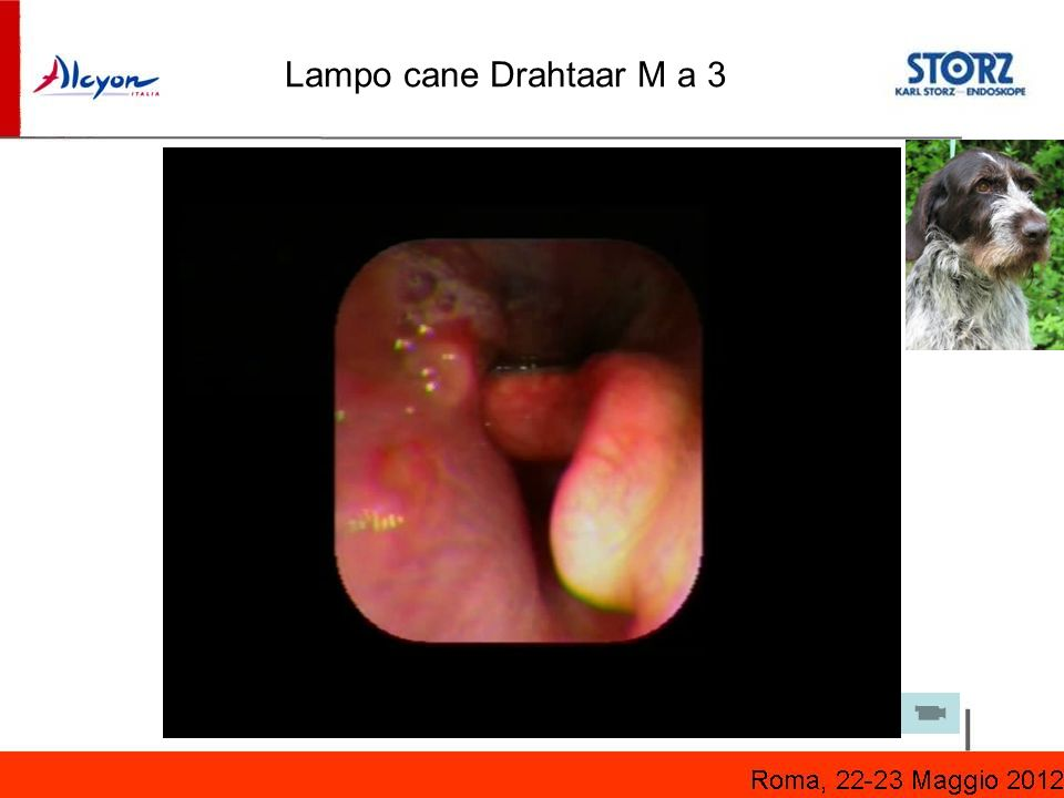 Lampo cane Drahtaar M a 3