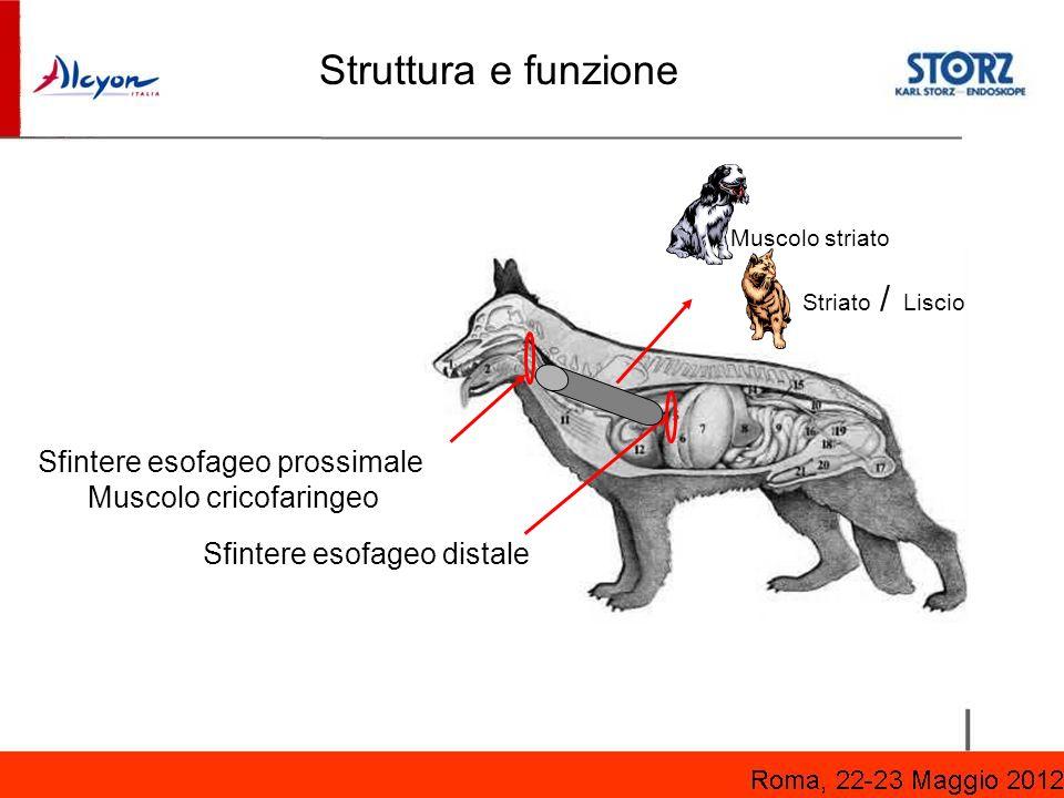 Struttura e funzione Sfintere esofageo prossimale