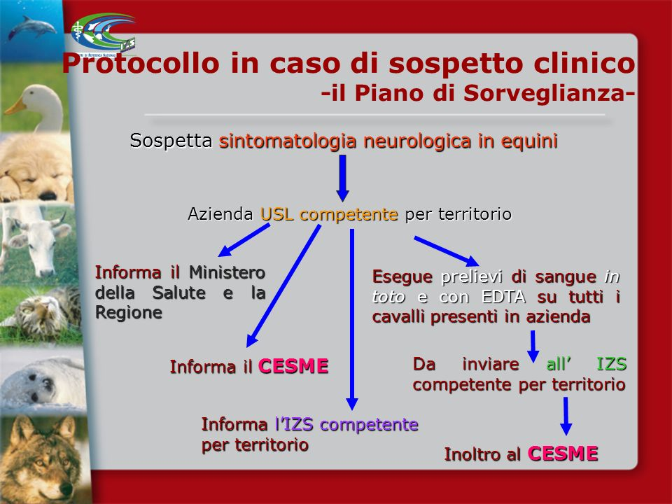Protocollo in caso di sospetto clinico