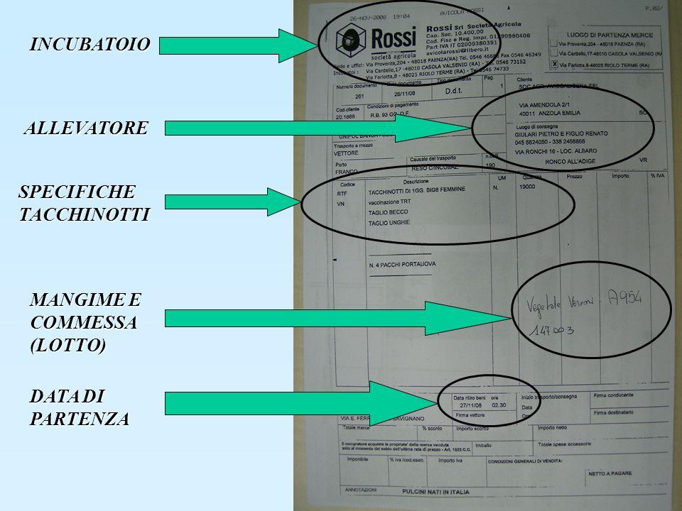 INCUBATOIO ALLEVATORE SPECIFICHE TACCHINOTTI MANGIME E COMMESSA (LOTTO) DATA DI PARTENZA