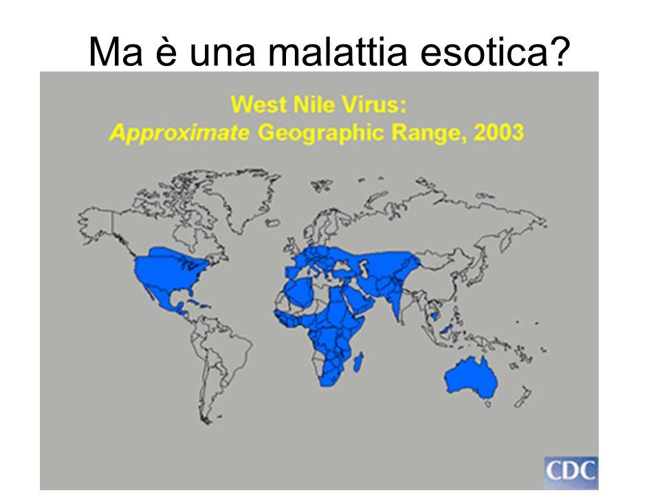 Ma è una malattia esotica