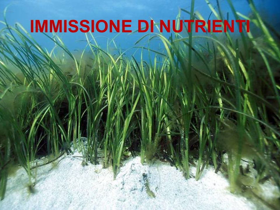 IMMISSIONE DI NUTRIENTI