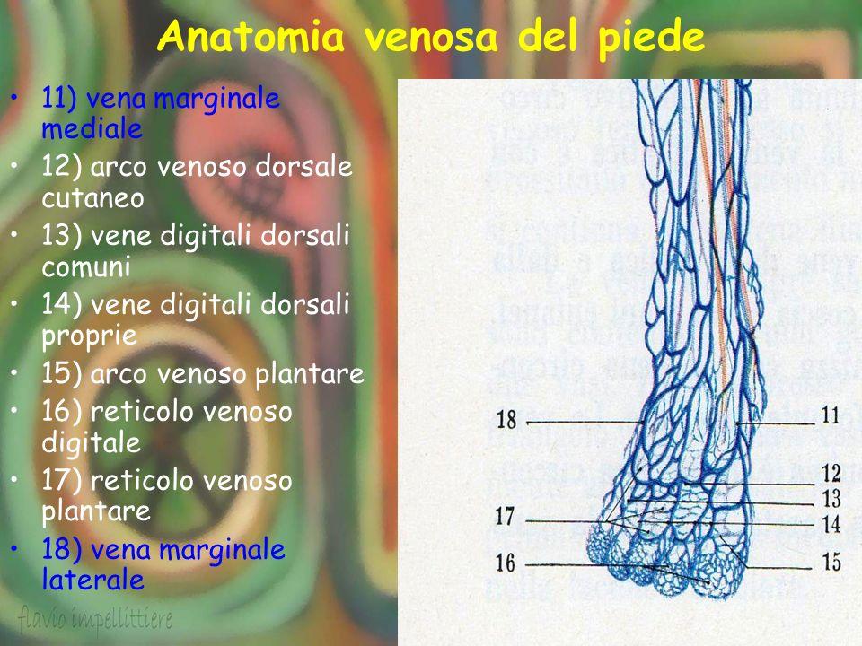Anatomia venosa del piede