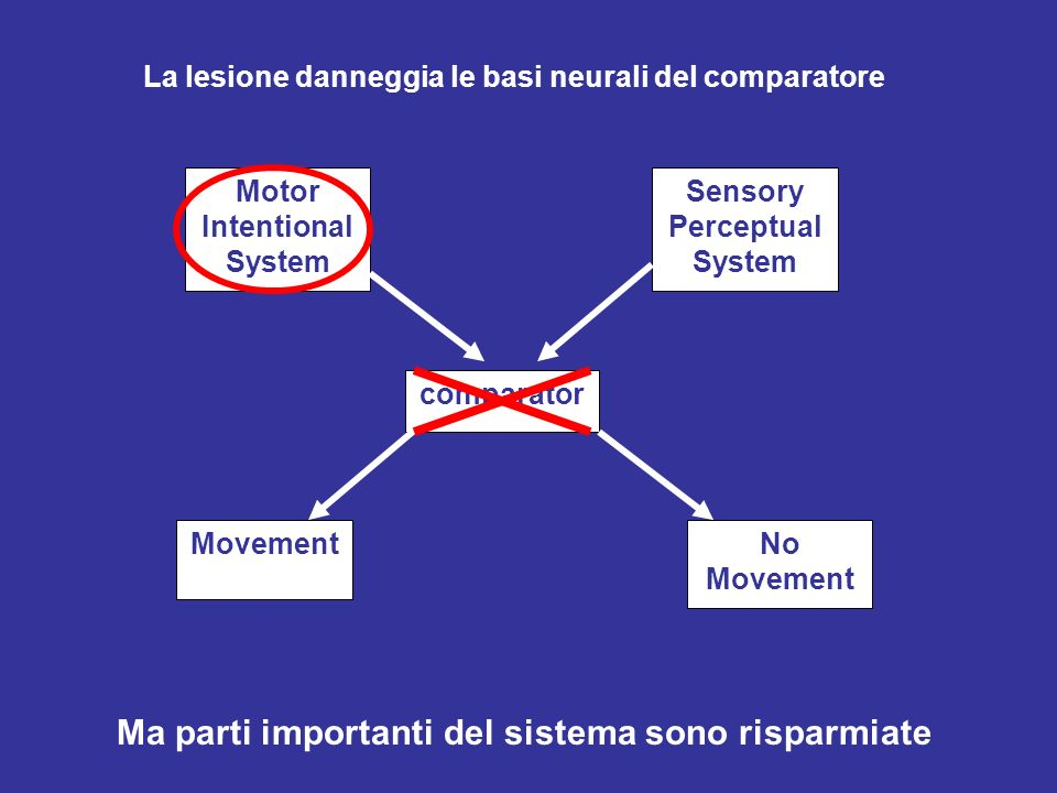 Motor Intentional System Sensory Perceptual System