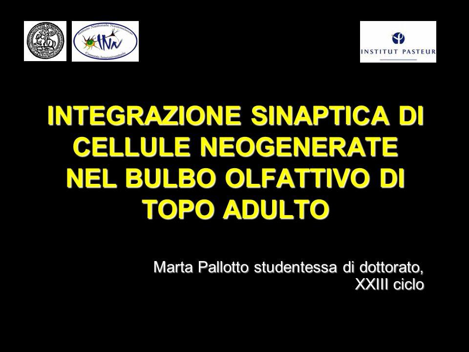 Marta Pallotto studentessa di dottorato, XXIII ciclo