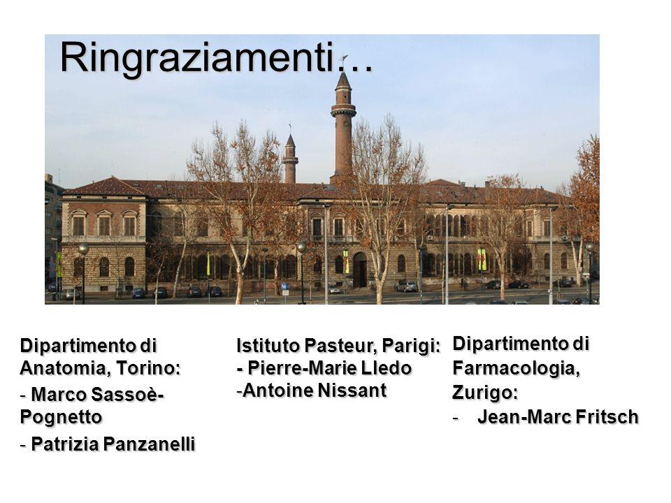 Ringraziamenti… Dipartimento di Anatomia, Torino: