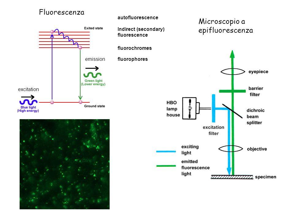 Microscopio a epifluorescenza