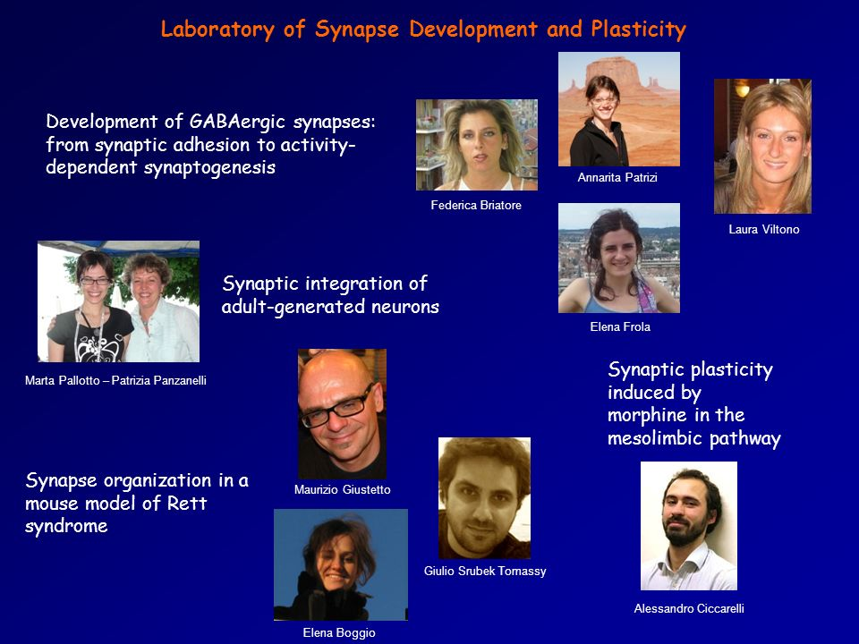 Laboratory of Synapse Development and Plasticity