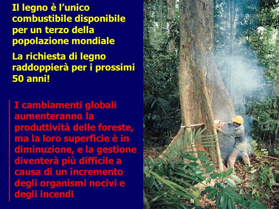 Il legno è l'unico combustibile disponibile per un terzo della popolazione mondiale