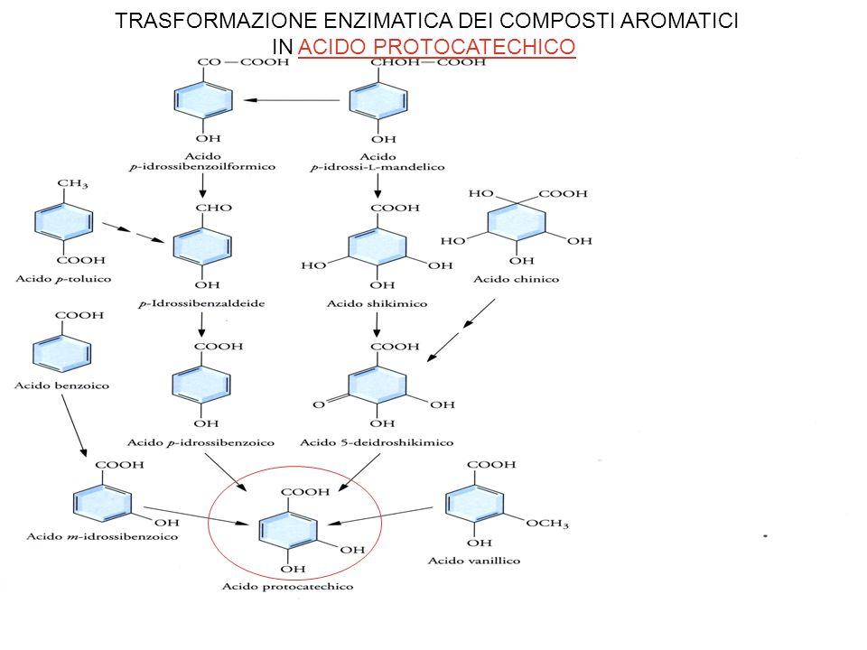 TRASFORMAZIONE ENZIMATICA DEI COMPOSTI AROMATICI