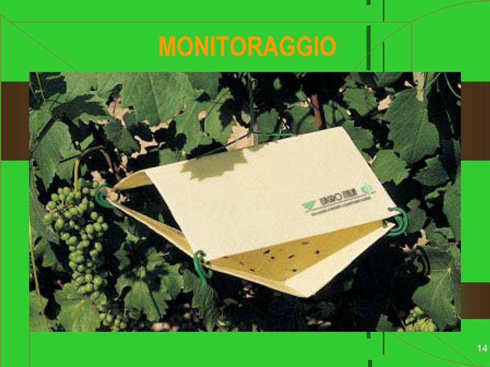 MONITORAGGIO L.C.