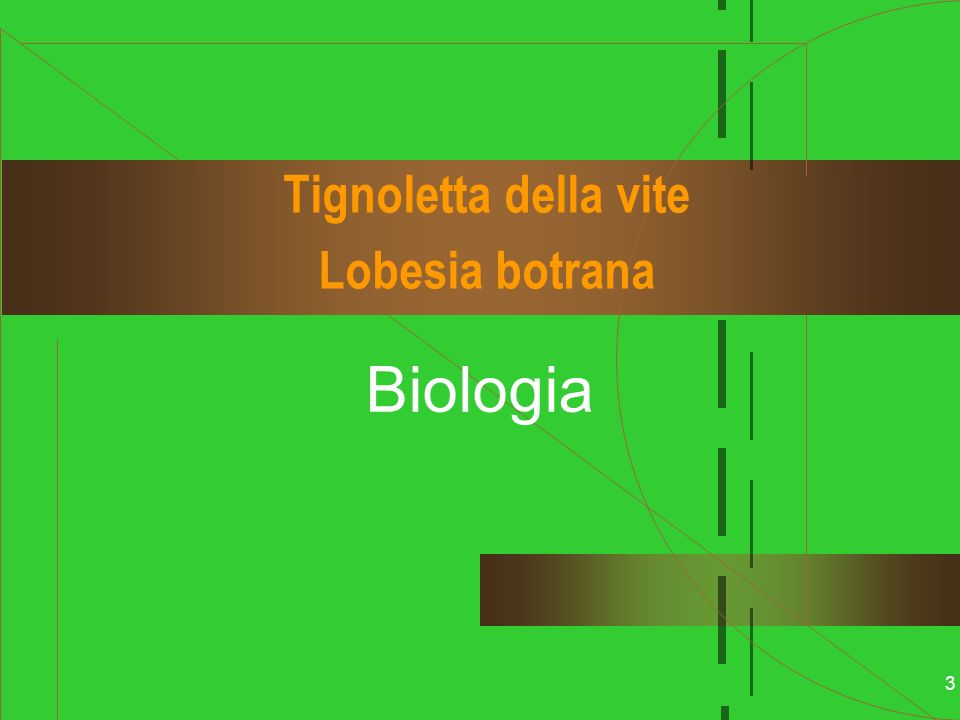 Tignoletta della vite Lobesia botrana