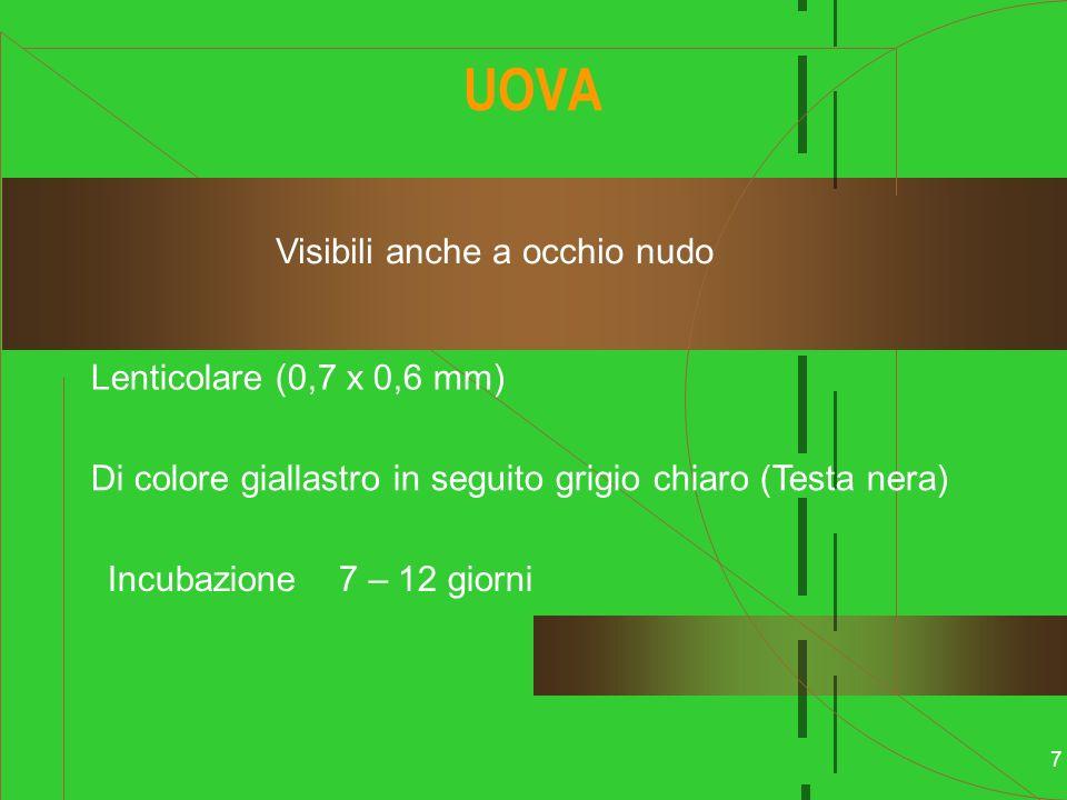 UOVA Visibili anche a occhio nudo Lenticolare (0,7 x 0,6 mm)