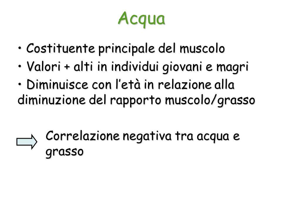 Acqua Costituente principale del muscolo