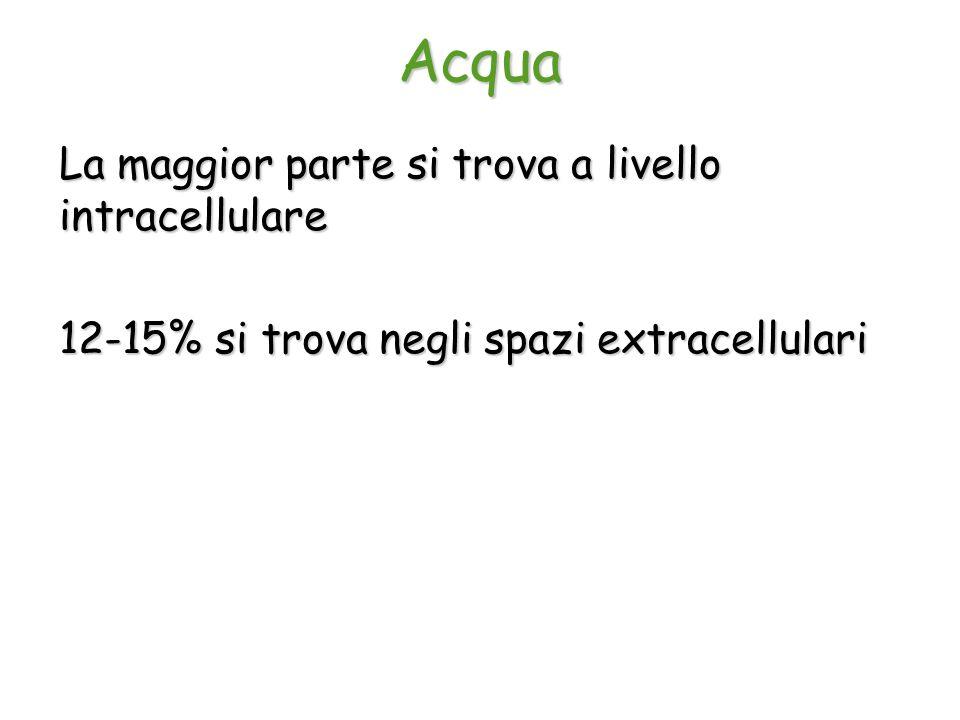 Acqua La maggior parte si trova a livello intracellulare