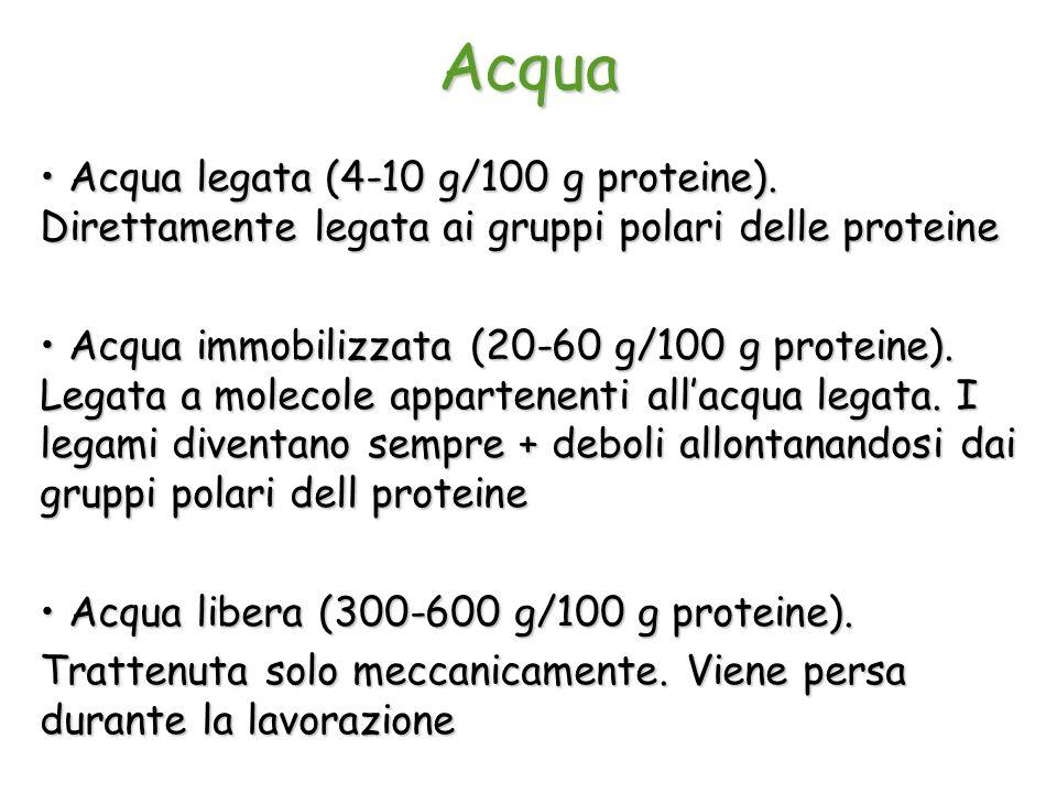Acqua Acqua legata (4-10 g/100 g proteine). Direttamente legata ai gruppi polari delle proteine.