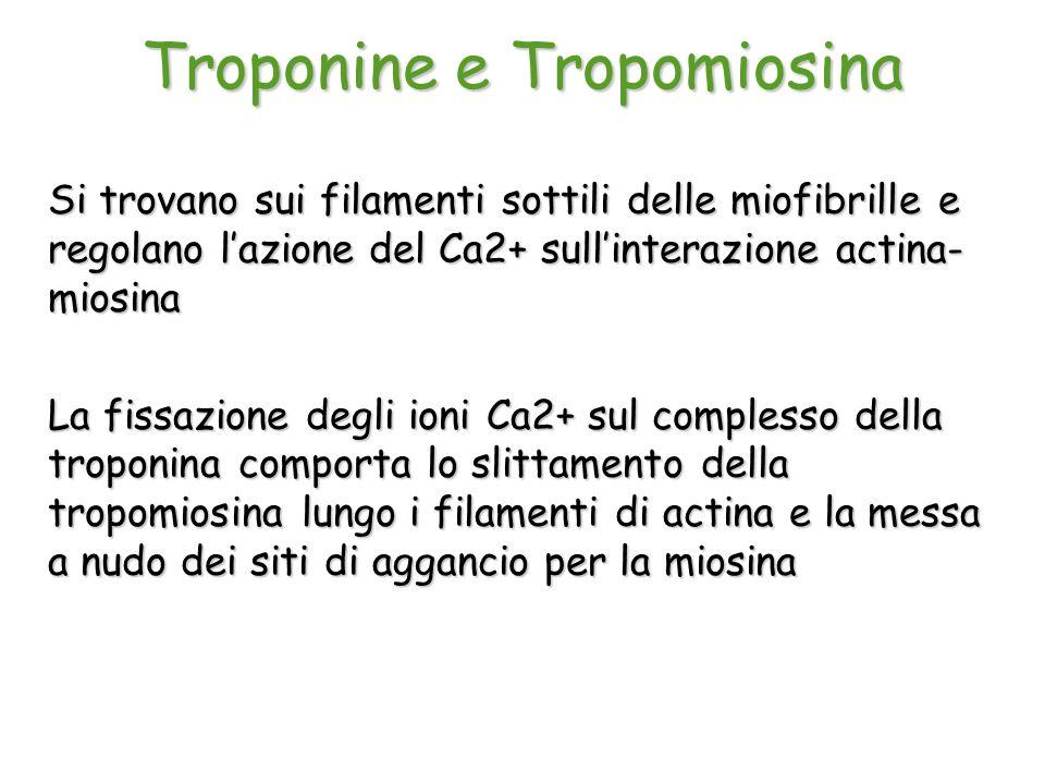 Troponine e Tropomiosina