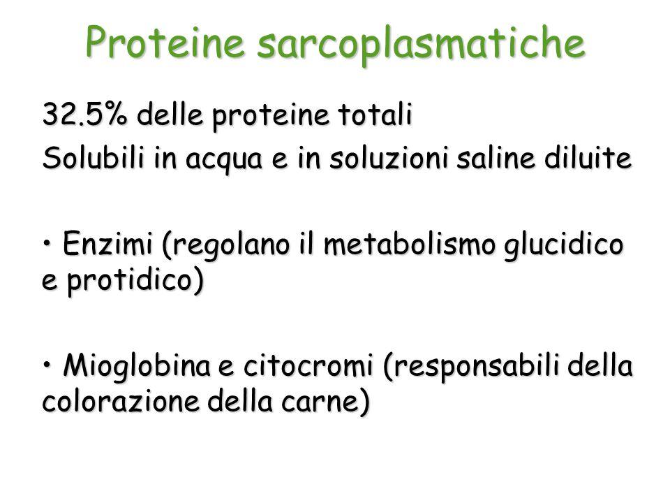 Proteine sarcoplasmatiche