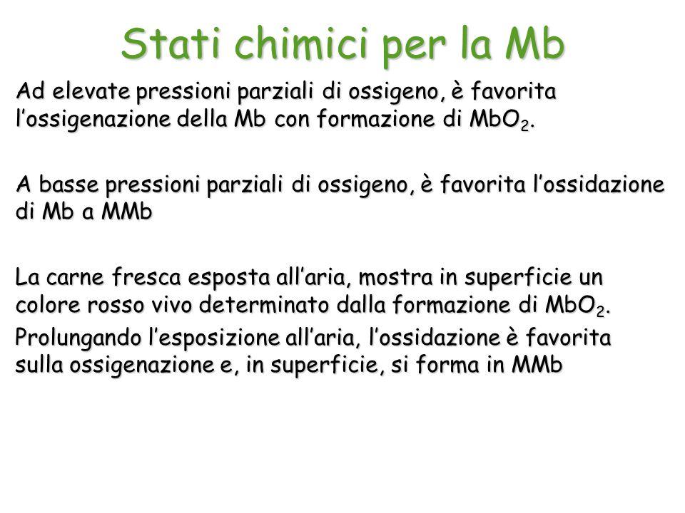 Stati chimici per la Mb Ad elevate pressioni parziali di ossigeno, è favorita l'ossigenazione della Mb con formazione di MbO2.