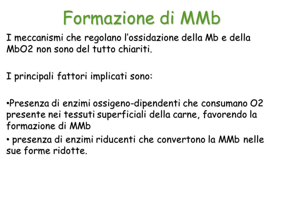 Formazione di MMb I meccanismi che regolano l'ossidazione della Mb e della MbO2 non sono del tutto chiariti.