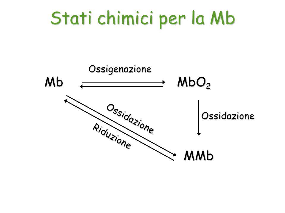 Stati chimici per la Mb Mb MbO2 MMb Ossigenazione Ossidazione