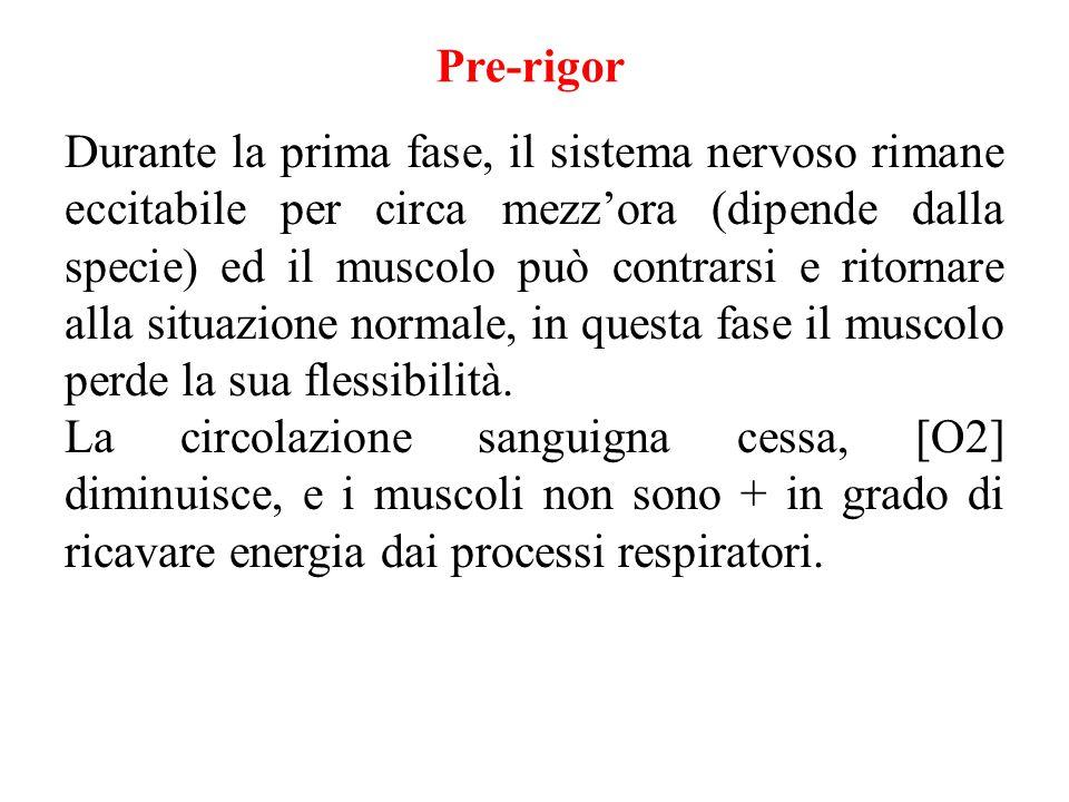 Pre-rigor