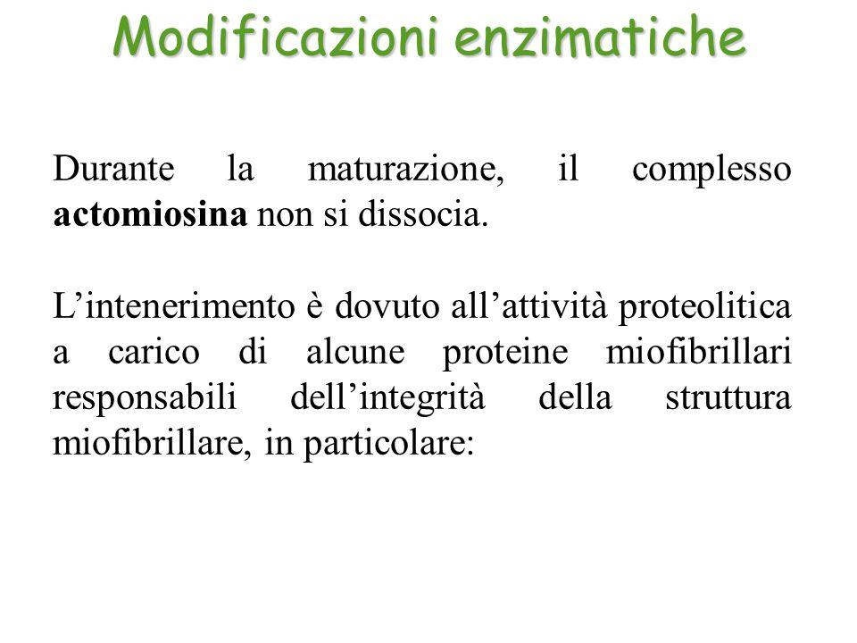 Modificazioni enzimatiche