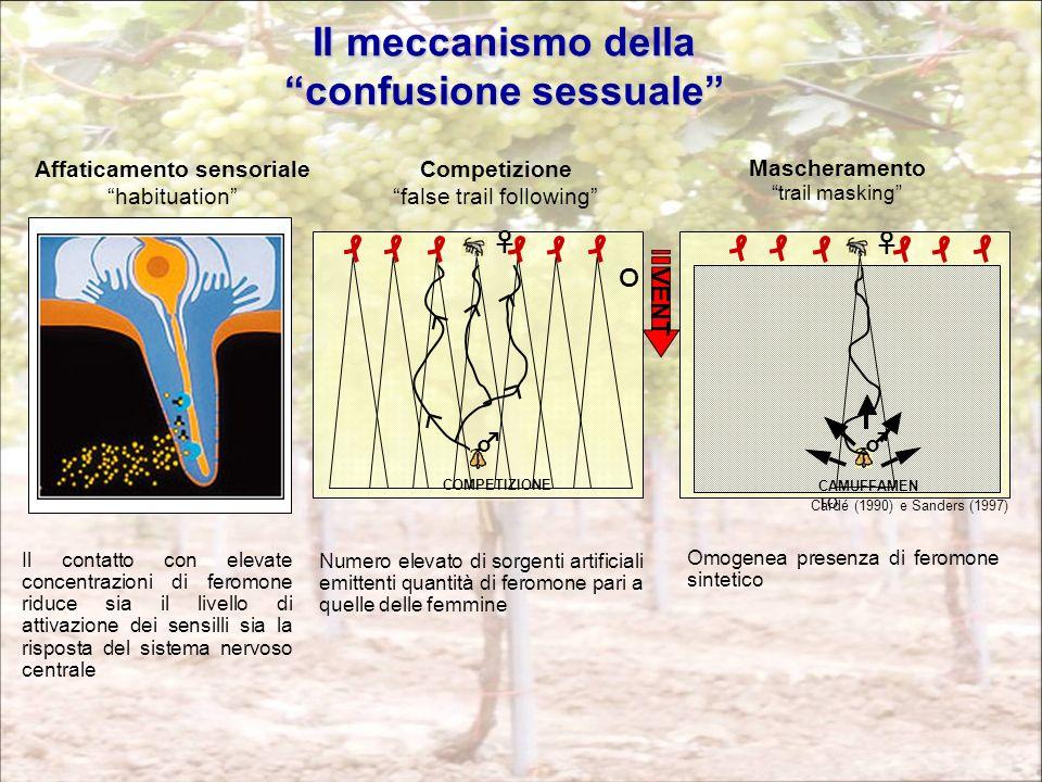 Il meccanismo della confusione sessuale Affaticamento sensoriale