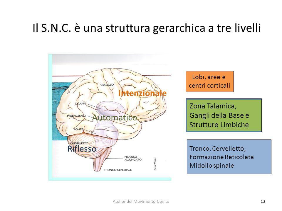 Il S.N.C. è una struttura gerarchica a tre livelli