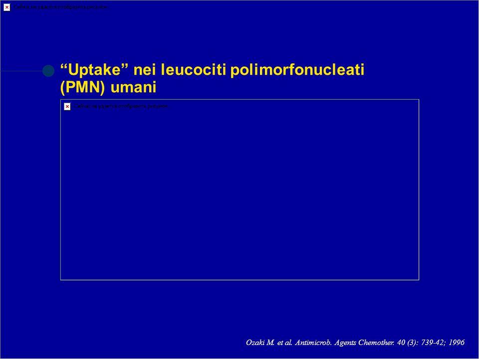 Uptake nei leucociti polimorfonucleati (PMN) umani