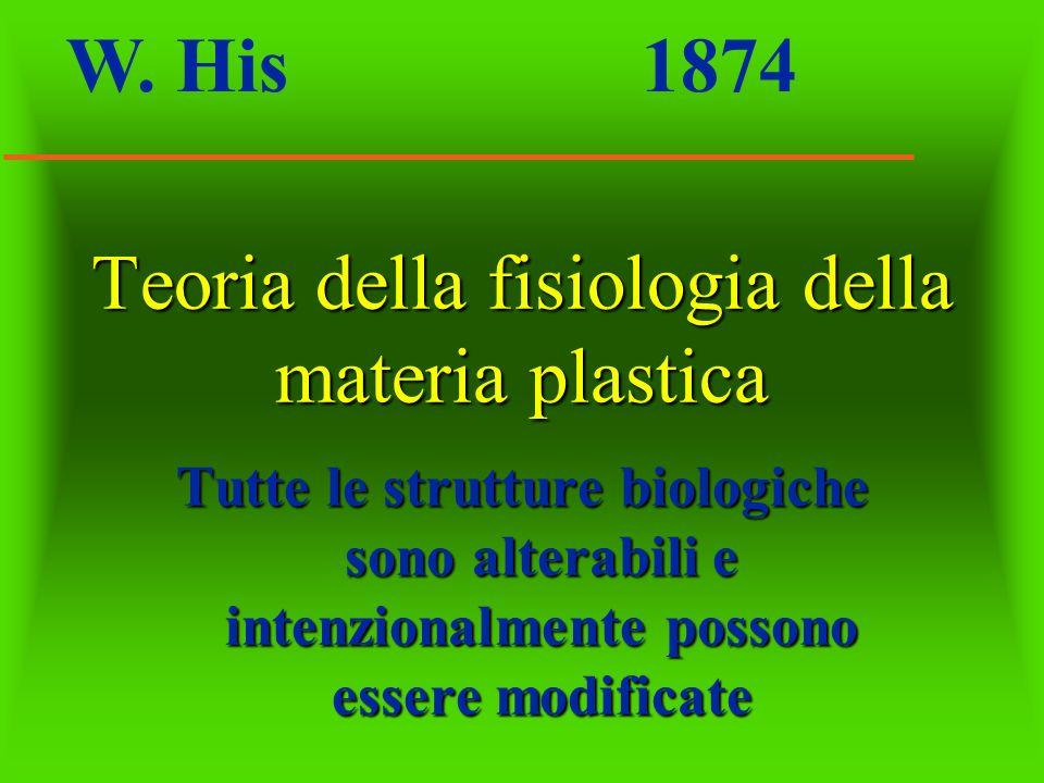 Teoria della fisiologia della materia plastica