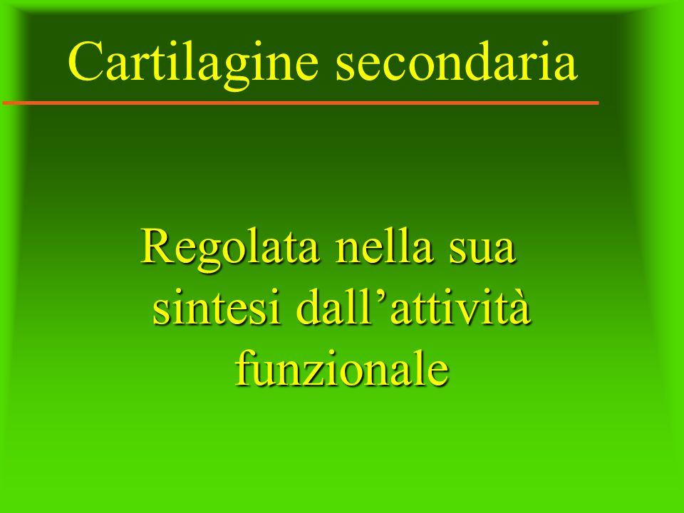 Cartilagine secondaria